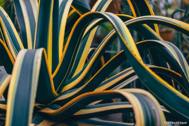 Erika Parfenova 自然的色彩 视觉艺术欣赏