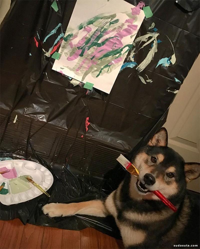 Hunter 会画画的柴犬