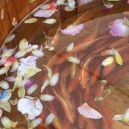 Riusuke Fukahori 树脂画 摇曳的金鱼