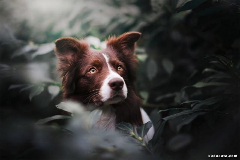 Kristýna Kvapilová 宠物摄影欣赏