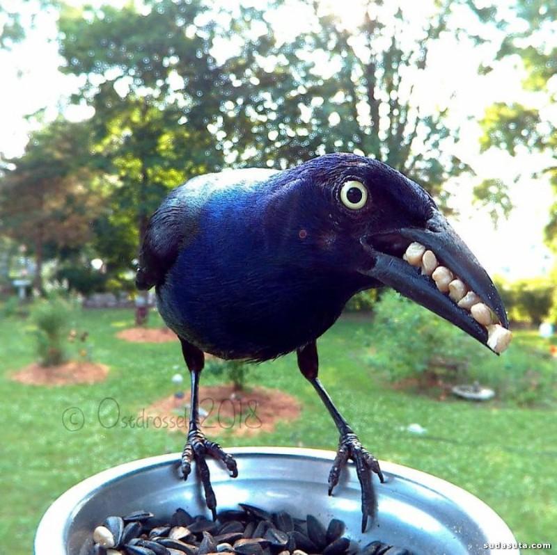 Lisa 的小鸟