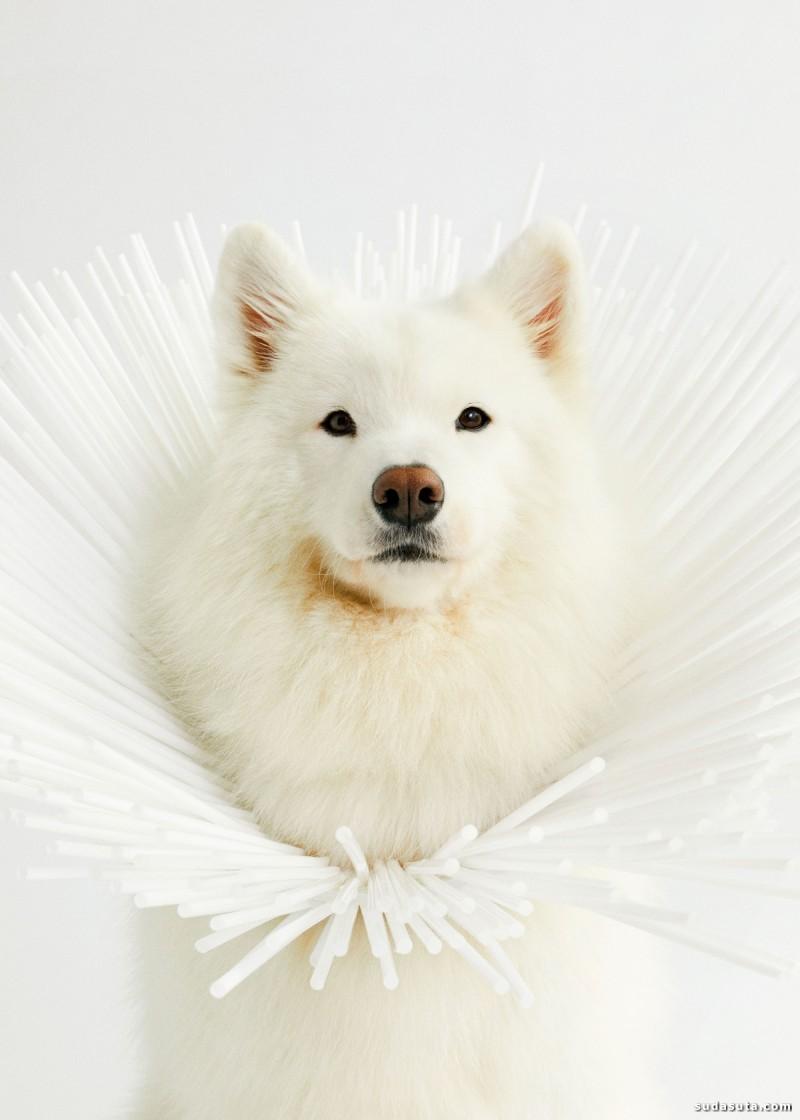 Winnie Au 帅狗肖像照