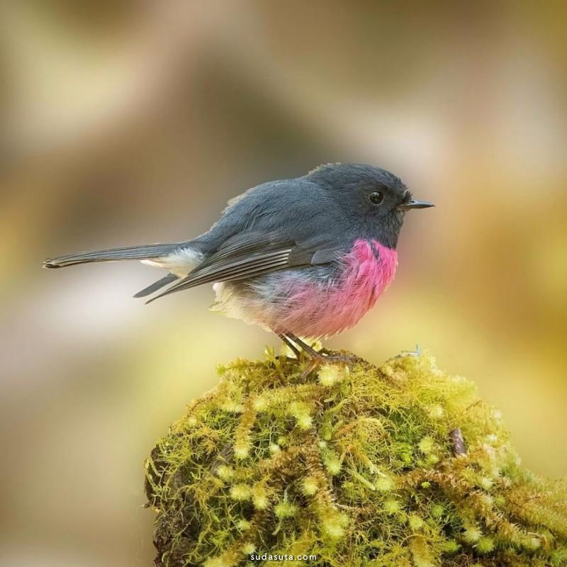 Barry Baker 鸟类摄影欣赏