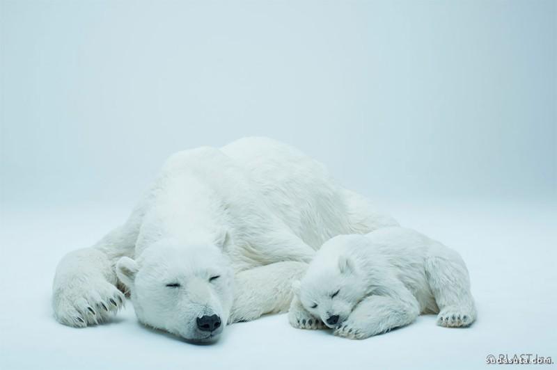 Blast 白熊 逼真的动物模型