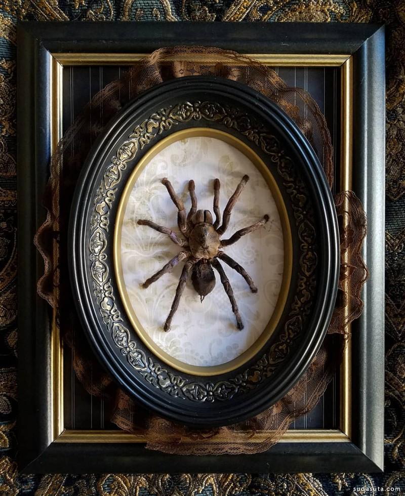 CarLy Haney 蜘蛛爱好者