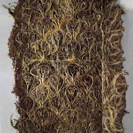 艺术家Diane Scherer 植物的根