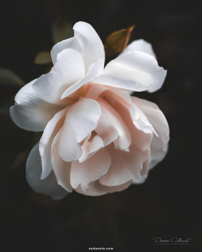 Doreen Albrecht 花朵摄影欣赏