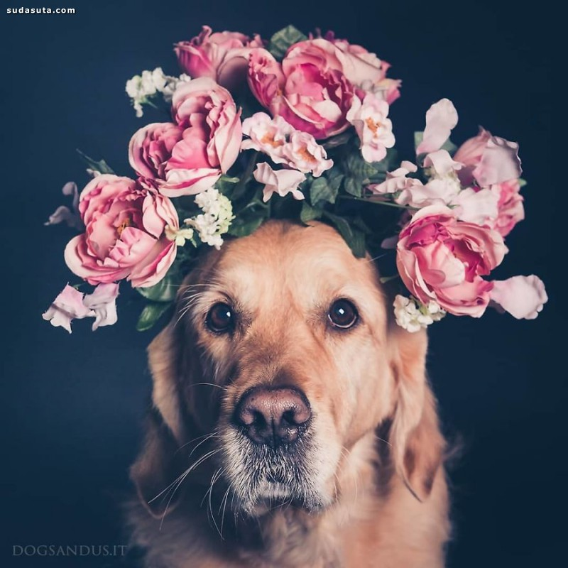 DogsAndUs 狗狗的肖像摄影