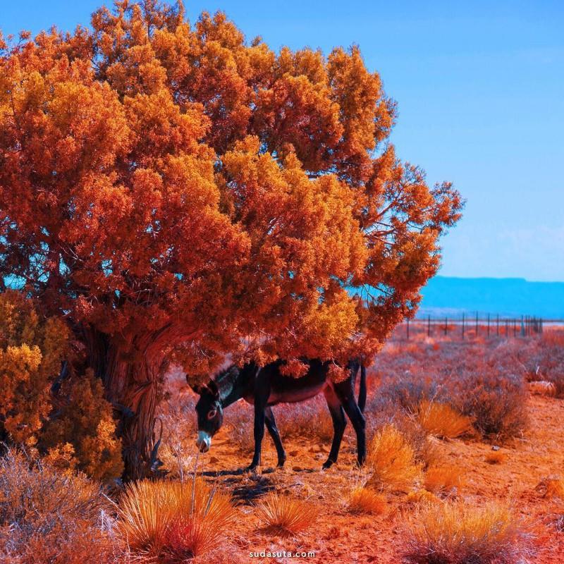 Mischelle Moy 自然风景摄影欣赏