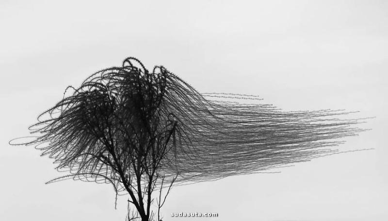 Xavi Bou 鸟类摄影欣赏