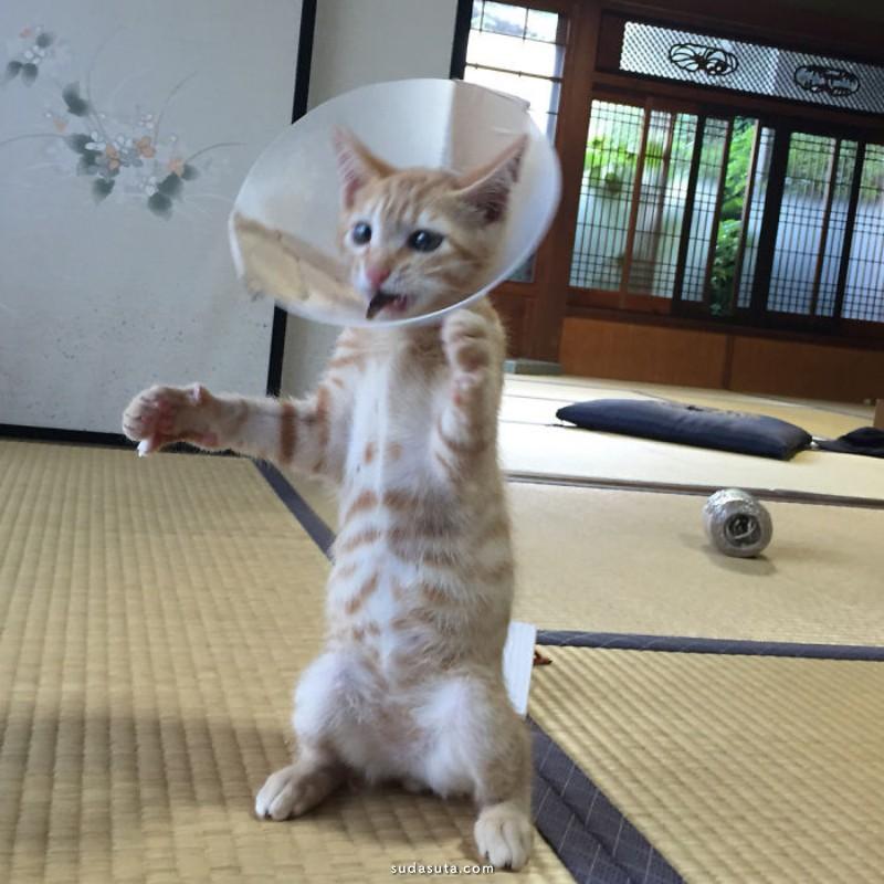 猫咪爱跳舞 宠物摄影欣赏
