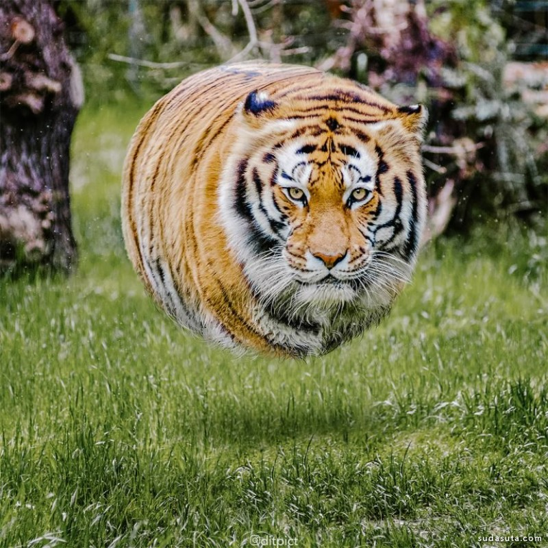 Aditya Aryanto 动物照片合成作品欣赏