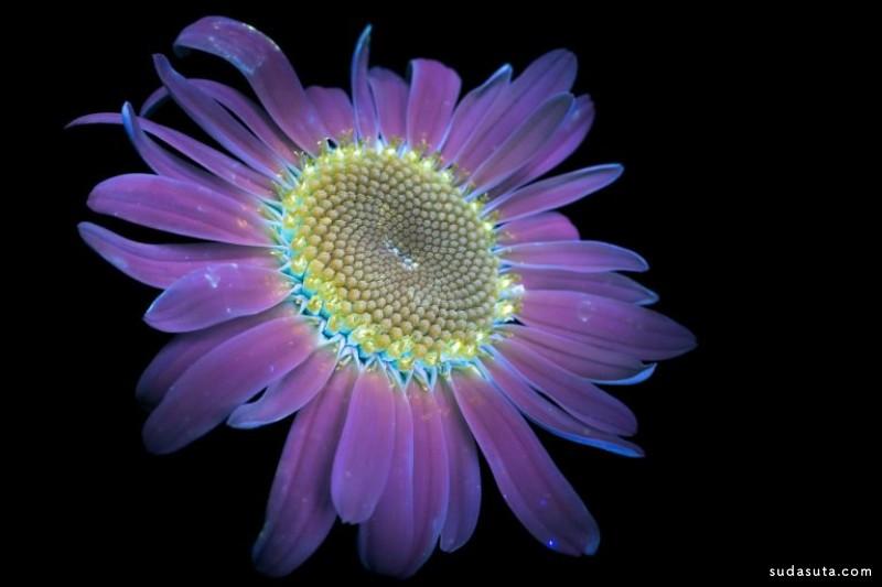 Craig Burrows 不可思议的花朵摄影