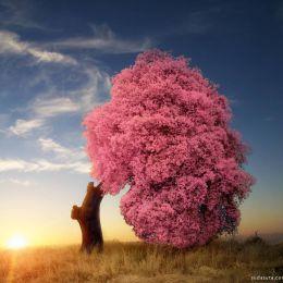 Marta Borreguero 自然风景摄影欣赏