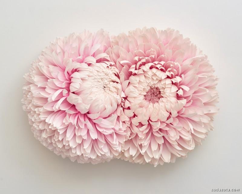 Tiffanie Turner 花朵的姿态 摄影作品欣赏