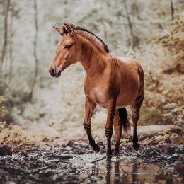 Carina Maiwald 动物肖像摄影欣赏