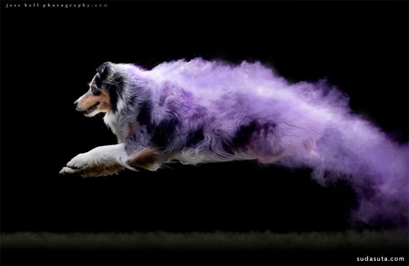 Jess Bell 超级狗狗 宠物肖像摄影欣赏