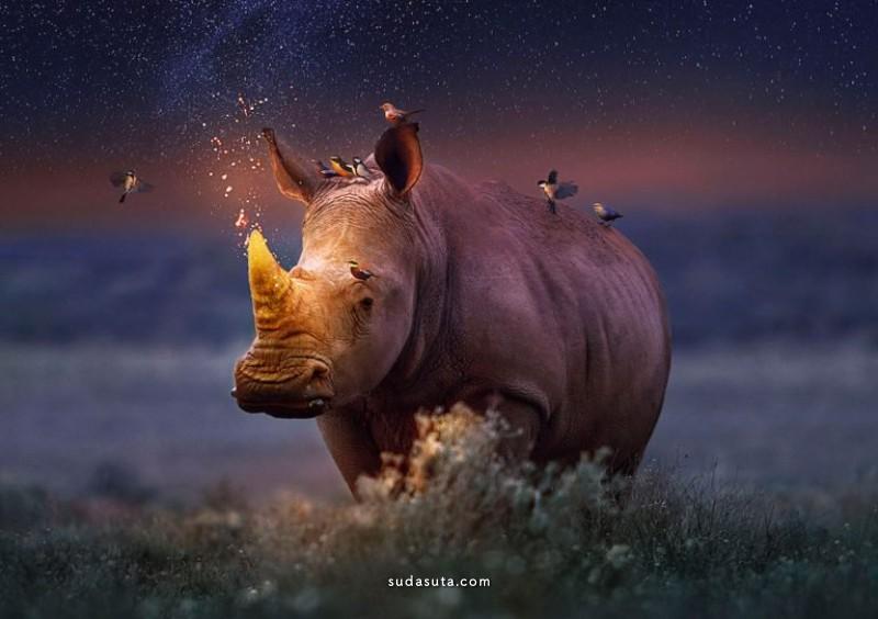 Andreas Häggkvist 野生动物 照片合成作品欣赏