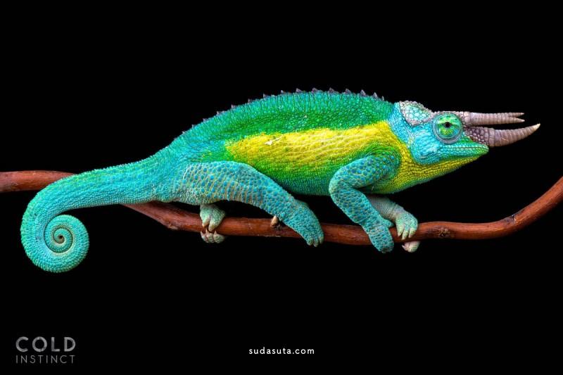 Matthis Kuijpers 动物肖像摄影欣赏