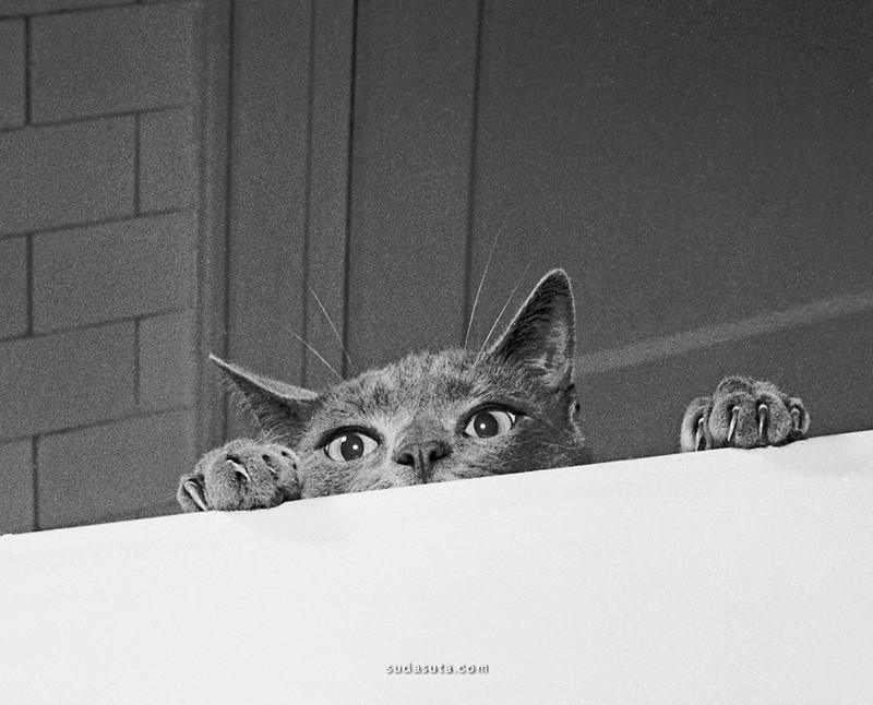 Walter Chandoha 猫 宠物摄影欣赏