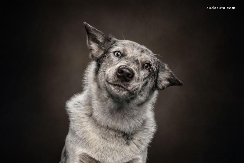 Belinda Richards 宠物摄影欣赏