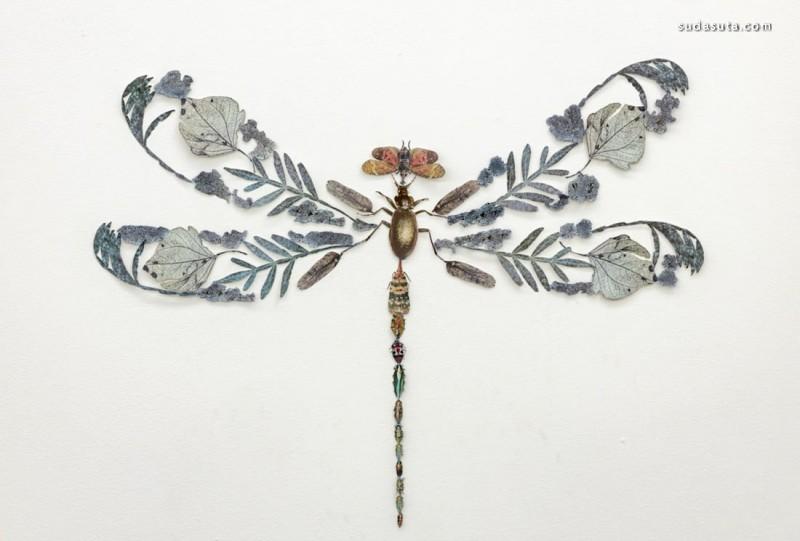 Jennifer Murphy 花与昆虫 拼贴艺术欣赏