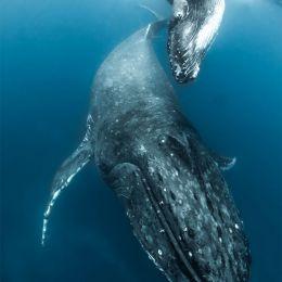 Grant Thomas 不可思议的水下摄影欣赏