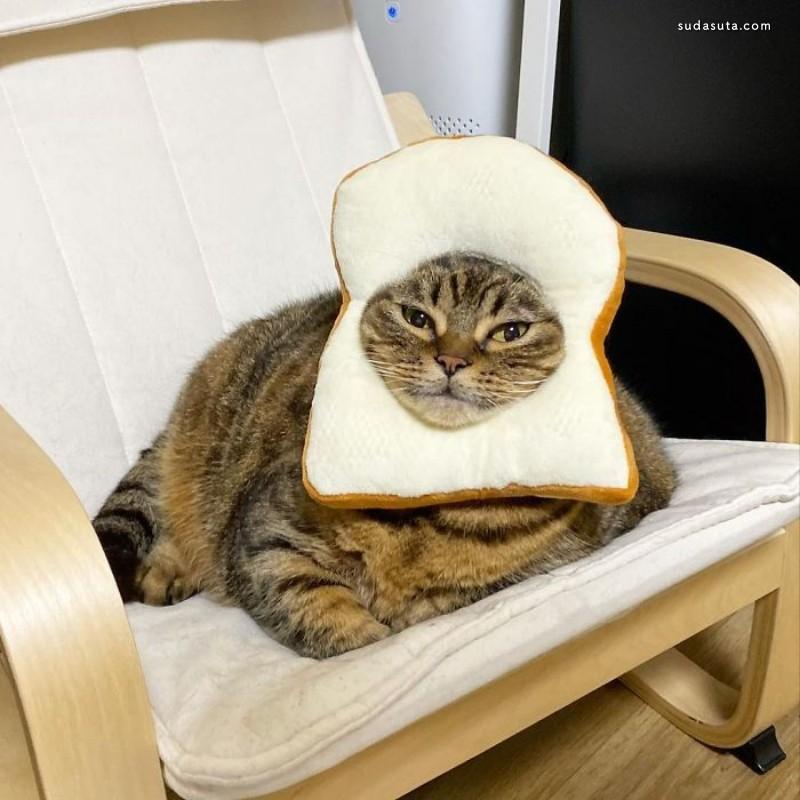 一只叫做 Manggo 的猫