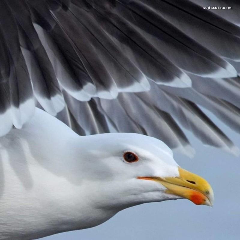 Ruurd Jelle van der Leij 迷人的鸟类摄影