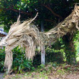 Shimadakara 棕榈的龙