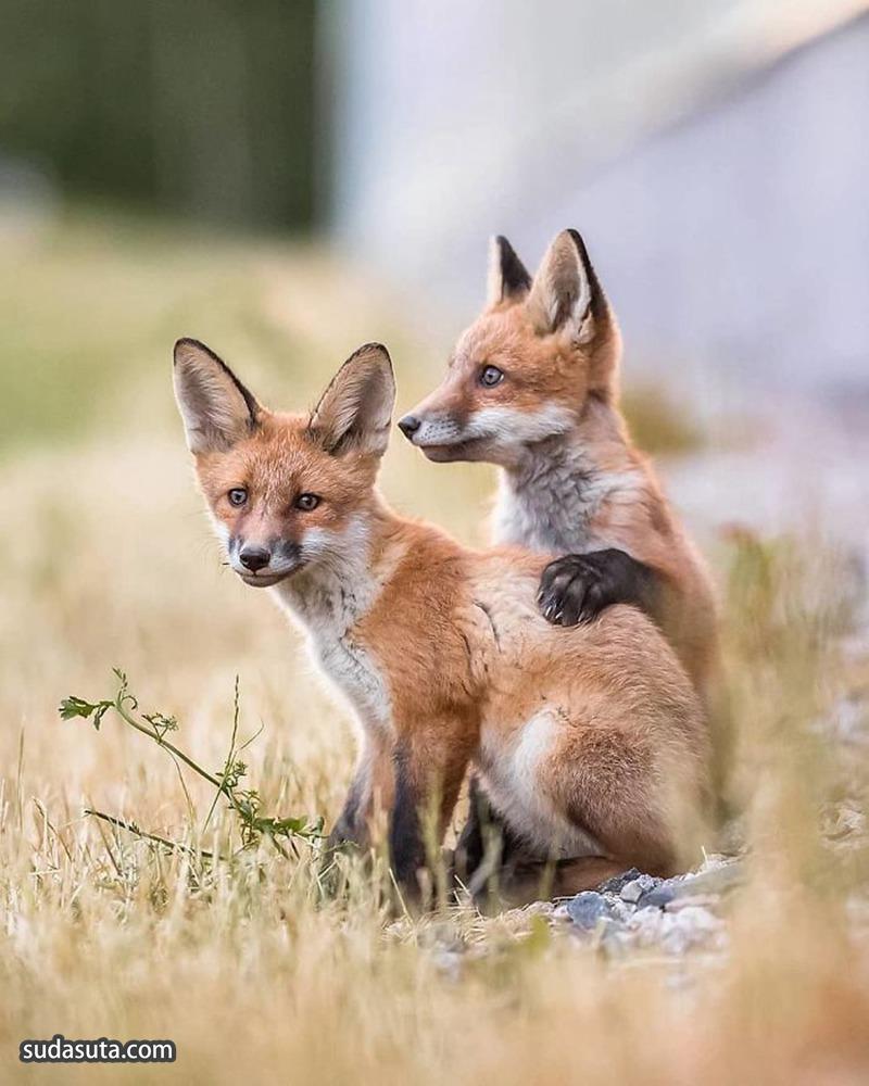 Ossi Saarinen 可爱的小动物 宠物摄影欣赏