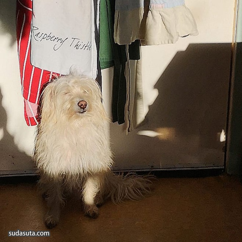 爱与幸福的满满的日光浴 宠物摄影欣赏