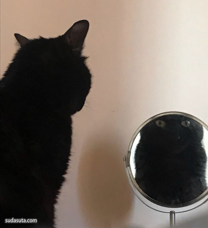 镜子和宠物 蠢萌的喵星人