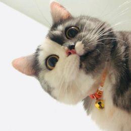 遇见可爱的Chimera 宠物摄影欣赏