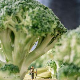 Erin Sullivan 迷你蔬菜世界