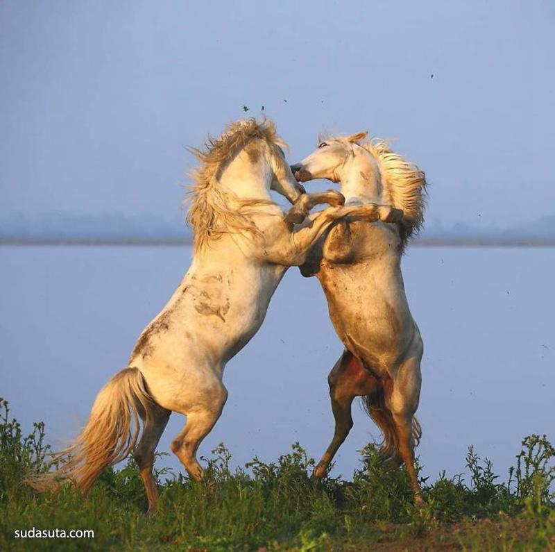 Andrey Gudkov 动物摄影欣赏