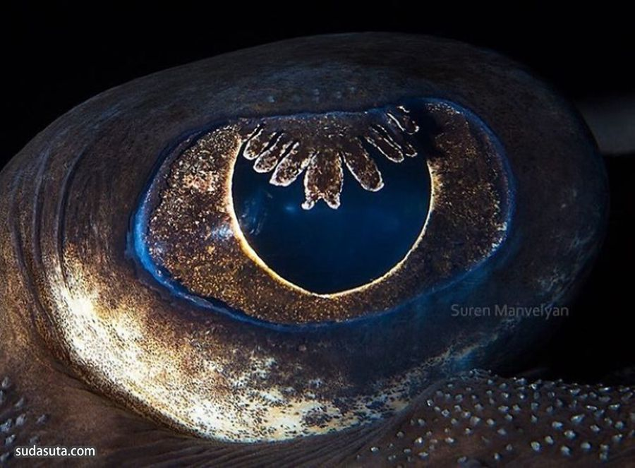 Suren Manvelyan 不可思议的动物瞳孔