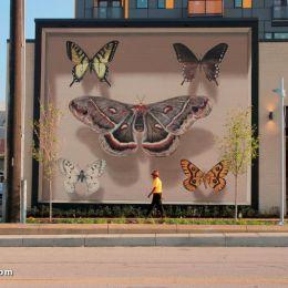 Mantra 巨大的蝴蝶