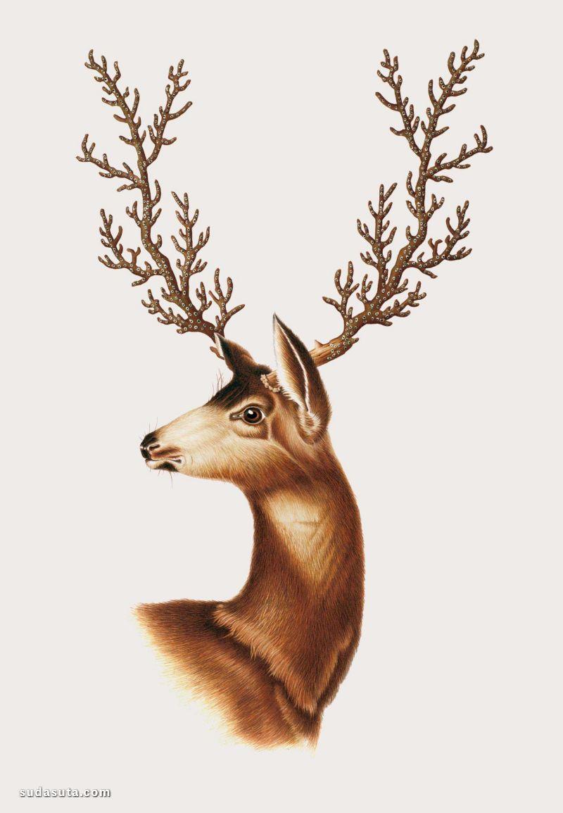 Mark Brooks 神奇动物图鉴