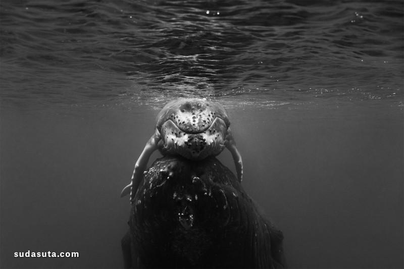 Jem Cresswell 鲸吞 黑白摄影欣赏