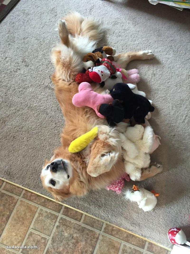 猫猫和他们的玩具们!