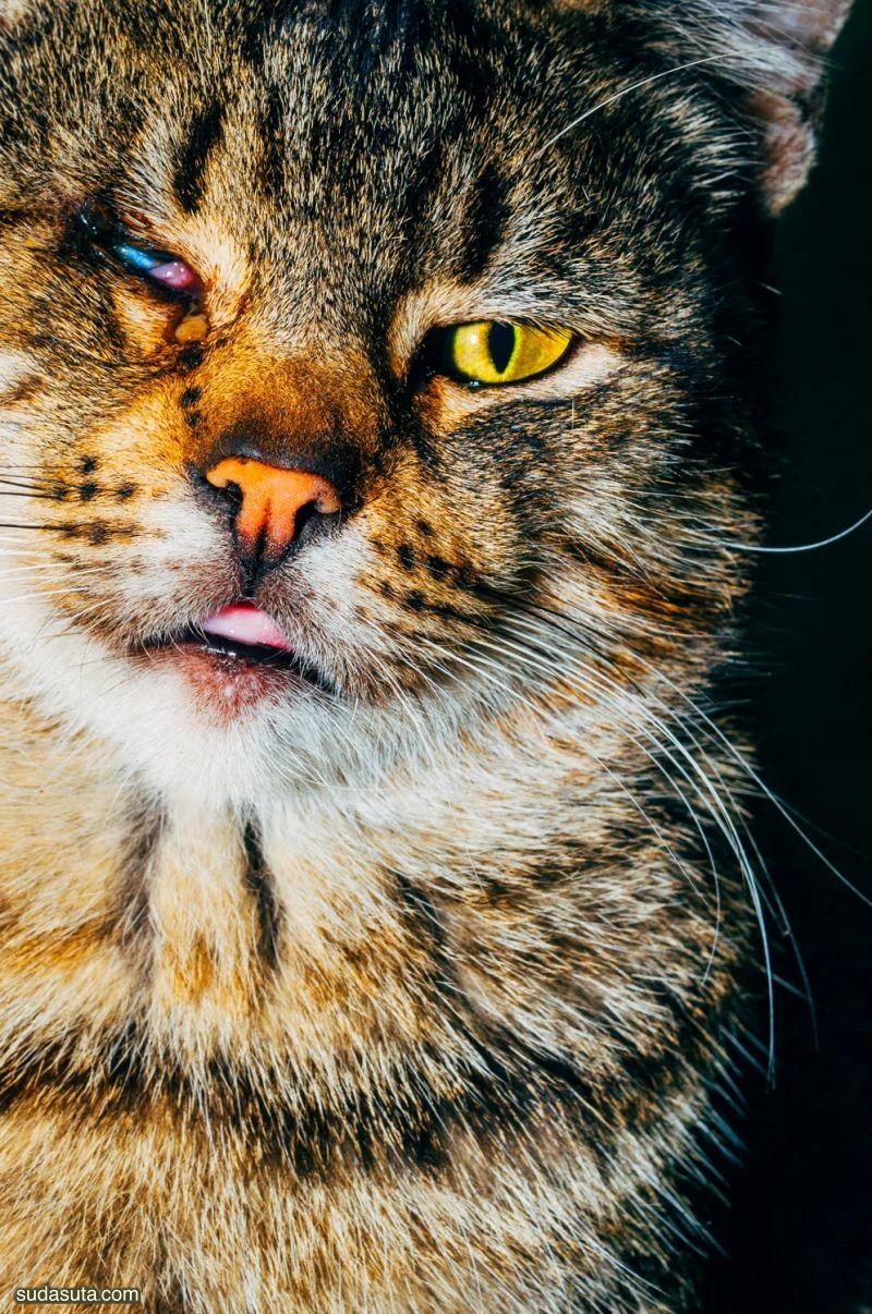 Nikita Teryoshin 城市的猫