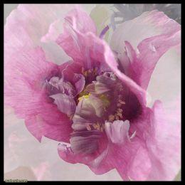 Sarah Eyton 挚爱花朵