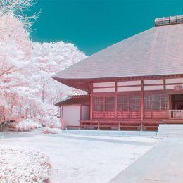 Yuuui 粉红樱花 城市摄影欣赏