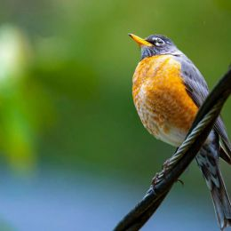 Fabio Sasso 可爱的鸟类摄影